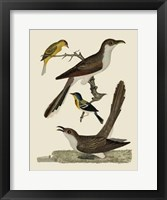 Framed Bird Family VI