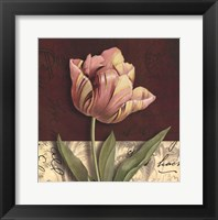 Framed Postcard Tulip