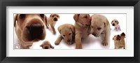 Framed Dogs - Labrador