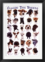 Framed Dog Breeds