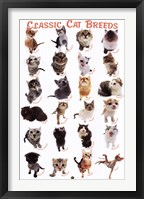 Framed Cat Breeds