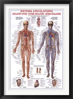 Framed Circulatory System