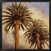 Framed Fog Over Canary Palms