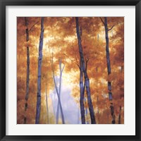 Blue Wood Canopy Framed Print