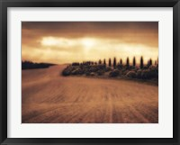 Framed Cypress Study - Tuscany