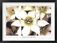 Framed Star of Bethlehem Triptych