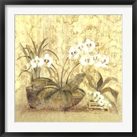 Framed Espirit Orchid