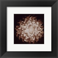 Framed Chrysanthemum