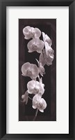 Orchid Opulence I Framed Print