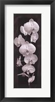 Framed Orchid Opulence II