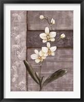 Framed Orchid Shimmer I