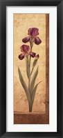 Grandiflora II Framed Print