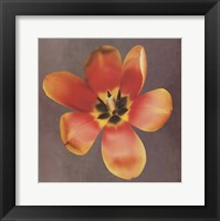 Sunshine Tulip Framed Print