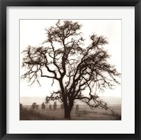 Country Oak Tree Framed Print