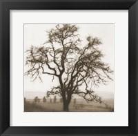 Country Oak Tree Framed Print