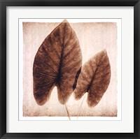 Framed Taro Leaves