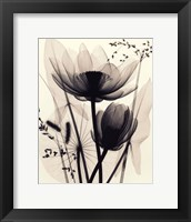 Lotus and Grasses Framed Print