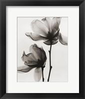 Framed Saucer Magnolia