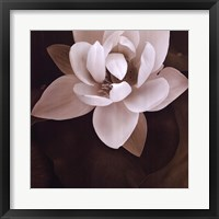 Amazon Lotus Framed Print