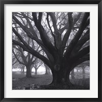 Oak Grove, Winter Framed Print