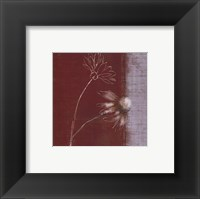 Daisy Sketch I Framed Print