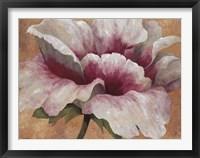 Framed Pink Begonia