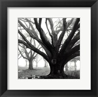 Framed Oak Grove, Winter