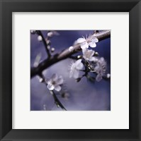 Cherry Blossoms I Framed Print