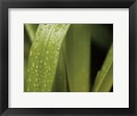 Framed Springtime II