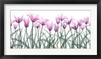 Framed Floral Delight II