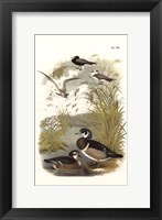Framed Ducks