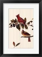 Framed Northern Cardinal