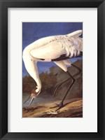 Framed Whooping Crane