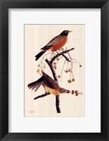 Framed American Robin