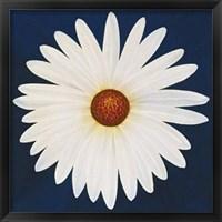 Framed Daisy 123 - 2004