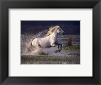 Framed Aquatic Gallop