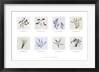Framed 8 Herbs