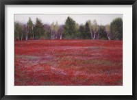 Framed Blueberry Fields in Autumn