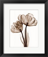 Framed Parrot Tulips II (Sm)