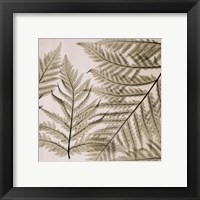 Ferns I Framed Print