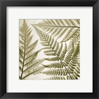 Ferns III Framed Print