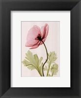 Iceland Poppy II (Sm) Framed Print