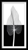 Framed Calla Leaf II