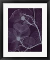 Dogwoodsilver Framed Print