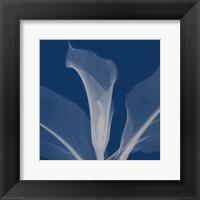 Callasilver Framed Print
