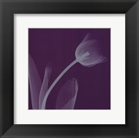 Tulipsilver (Sm) Framed Print