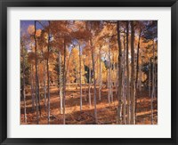Autumn Aspens Framed Print