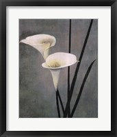 Framed Call Lily on Grey