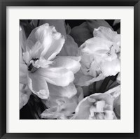 Delphiniums II Framed Print