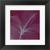 Hibiscus/Silver (Sm) Framed Print